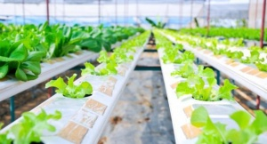 automated Agriculture in Japan